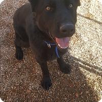 Adopt A Pet :: Shadow - Douglas, WY