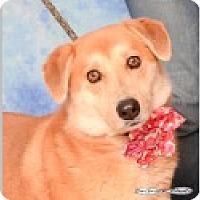 Adopt A Pet :: Annabelle - Pittsboro, NC