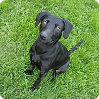 Adopt A Pet :: K17 - Indianola, IA
