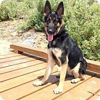 Adopt A Pet :: Rain - San Diego, CA
