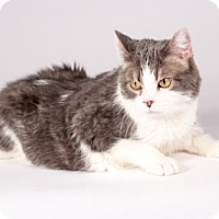 Adopt A Pet :: Miss Pip - Kingston, ON