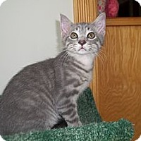 Adopt A Pet :: Shadow - Acme, PA
