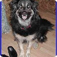 Adopt A Pet :: Daphny - Hamilton, ON