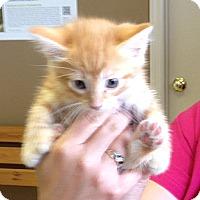 Adopt A Pet :: Baldwin - Troy, OH