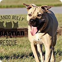 Adopt A Pet :: Sebastian - Orlando, FL