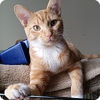 Adopt A Pet :: Tobi - St. Louis, MO