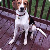 Adopt A Pet :: Paco - Chesterfield, VA
