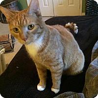 Adopt A Pet :: Timmy - Hamilton, ON