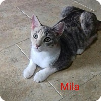 Adopt A Pet :: Mila - McDonough, GA