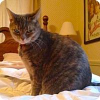 Adopt A Pet :: Laura-Cat - Oberlin, OH