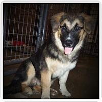Adopt A Pet :: TEDDY - Medford, WI