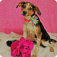 Adopt A Pet :: Judy - Waupaca, WI