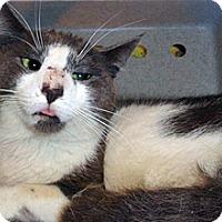 Adopt A Pet :: 339016 - Wildomar, CA