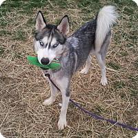 Adopt A Pet :: Sky - Harvard, IL