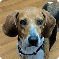 Adopt A Pet :: Johanna - Lisbon, OH
