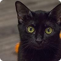 Adopt A Pet :: Mischonne - Fountain Hills, AZ
