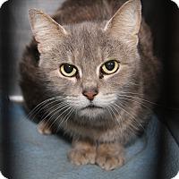 Adopt A Pet :: Sammy - Marietta, OH