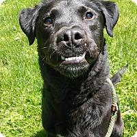 Adopt A Pet :: Buck - Guelph, ON