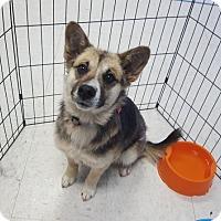 Adopt A Pet :: Bondi - Maple Grove, MN