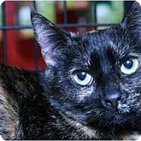 Adopt A Pet :: Mamacella - La Canada Flintridge, CA