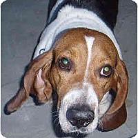 Adopt A Pet :: John Wayne - Phoenix, AZ