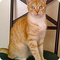 Adopt A Pet :: Thomas - Escondido, CA