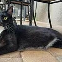 Adopt A Pet :: Oliver - Orlando, FL