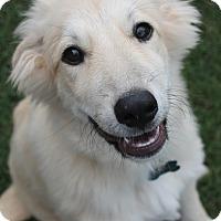 Adopt A Pet :: Fiona  *Adopted - Tulsa, OK