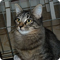 Adopt A Pet :: Kelsey - Stafford, VA