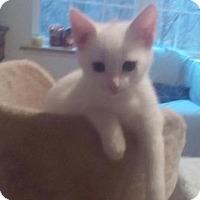 Adopt A Pet :: Winter - Kirkwood, DE