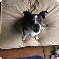 Adopt A Pet :: Bo - Fresno, CA