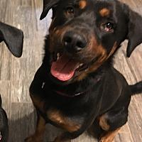 Adopt A Pet :: Junior - Gilbert, AZ