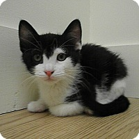 Adopt A Pet :: Ballou - Milwaukee, WI