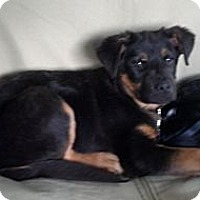 Adopt A Pet :: Conner - Brewster, NY