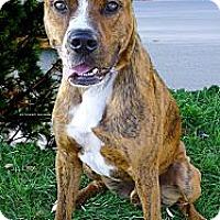 Adopt A Pet :: Scoobie great boy - Sacramento, CA