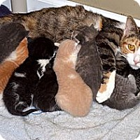 Adopt A Pet :: Cara & 8 Kittens - Xenia, OH