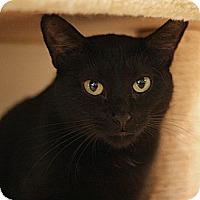 Adopt A Pet :: Harvey - Columbia, MD