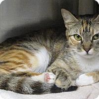 Adopt A Pet :: Tressy - Concord, NC