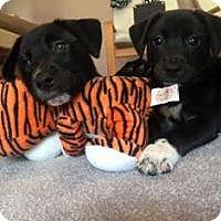 Adopt A Pet :: Tangi - Marlton, NJ