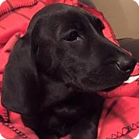 Adopt A Pet :: Lilly - Marlton, NJ