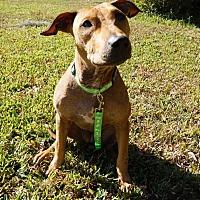 Adopt A Pet :: Audra - Ft. Myers, FL