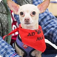 Adopt A Pet :: Kirby - Grand Rapids, MI