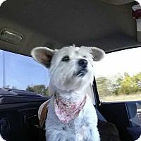 Adopt A Pet :: Susie - McCurtain, OK