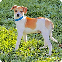Adopt A Pet :: Tater (VA) - Virginia Beach, VA