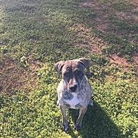 Adopt A Pet :: PANDORA - Glenburn, ME