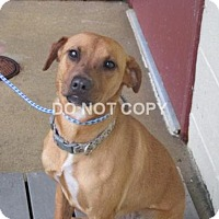 Adopt A Pet :: Calle - Rocky Mount, NC
