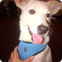 Adopt A Pet :: Jake - Braintree, MA