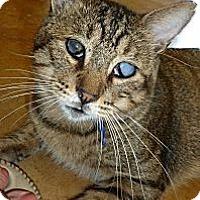 Adopt A Pet :: Silas - Lake Charles, LA