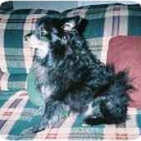 Adopt A Pet :: Prince - Chesapeake, VA