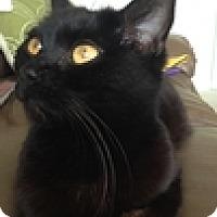 Adopt A Pet :: Laurel Mom - Vancouver, BC